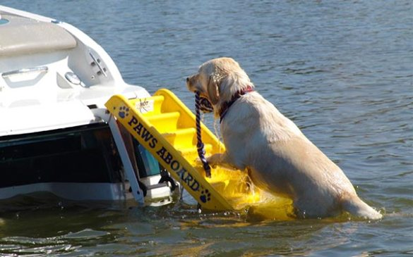 Dog Ramp Plans: Canoe Building Plan: Knowing Duck Boat Dog Ramp Plans